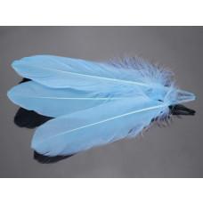 Pióra naturalne barwione koloru błękitnego 10-16cm