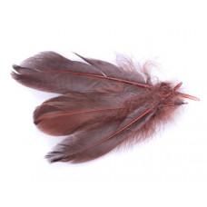 Pióra naturalne barwione koloru brązowego 10-16cm