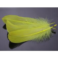 Pióra naturalne barwione koloru cytrynowego 10-16cm