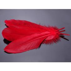 Pióra naturalne barwione koloru czerwonego 10-16cm