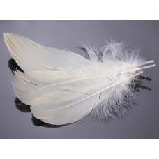 Pióra naturalne barwione koloru ecru 10-16cm
