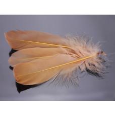 Pióra naturalne barwione koloru beżowego 10-16cm
