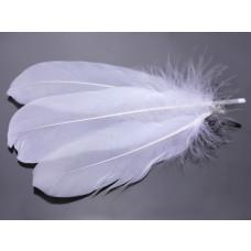 Pióra naturalne barwione koloru białego 10-16cm